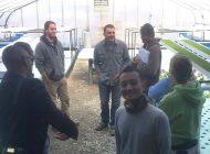 アクアポニックス農業のメリット、デメリット、課題は?【植物工場と比較】