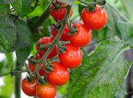 アクアポニックス野菜の種類【完全版】ハーブから観葉植物まで