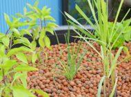 アクアポニックスに使える培地の種類【ハイドロボールが最適です】