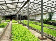 アクアポニックス農場訪問(台湾)-太魯閣767魚菜共生農場