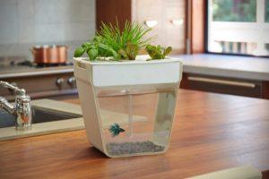 米国では小型栽培キットが続々登場している