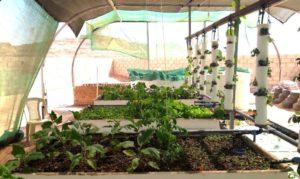 ヨルダンのアクアポニックス農場