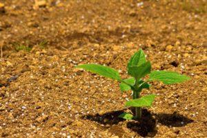 アクアポニックスでは土を必要としません。